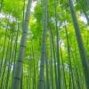 映画「グリーン・デスティニー」感想と評価【映画レビュー・洋画】